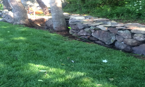 Lawn design and cleanup
